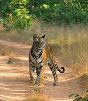 Kawal Wildlife Sanctuary