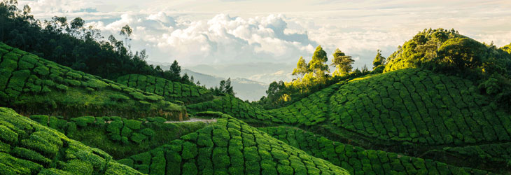 kerala-hill-tour-packages