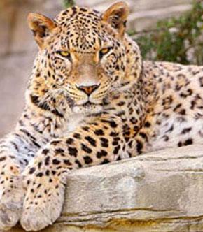 Pocharam Wildlife Sanctuary