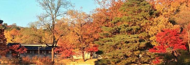 trip-to-south-korea