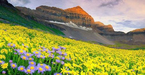 valleys-of-flowers