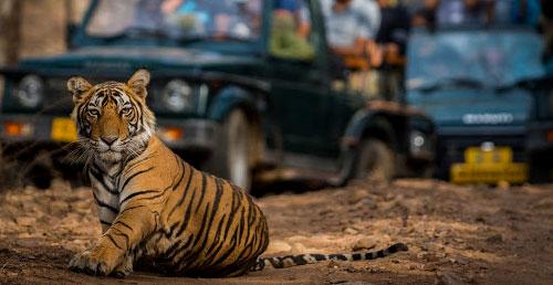 tiger-trail