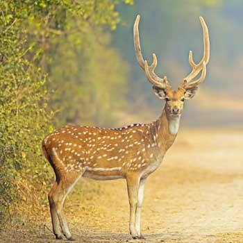Deer Park - tirupathi