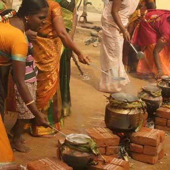 Pongal Festival in Tamilnadu