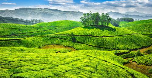 Tour to Cochin and Munnar