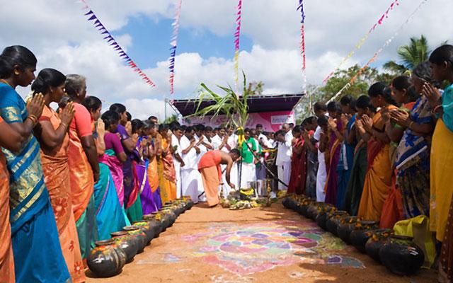 Thai Pongal celebration in Tamilnadu