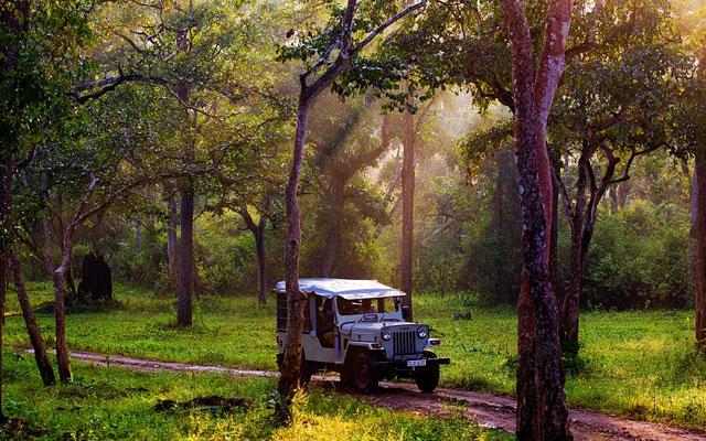 A Safari jeep in the morning at Bandipur National Park