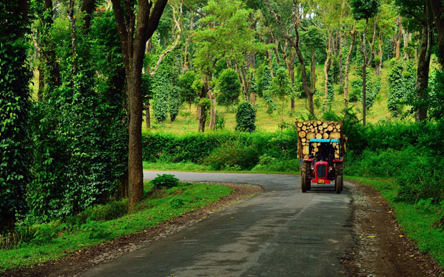 A tractor carrying timber through coffee and pepper plantations in Coorg, Karnataka.