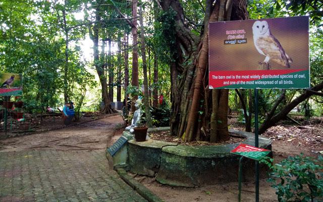Mangalavanam Bird Sanctuary