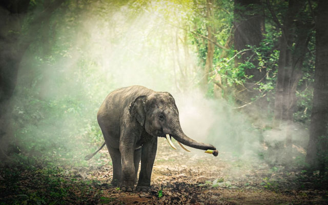 A beautiful baby elephant in the forest of South India